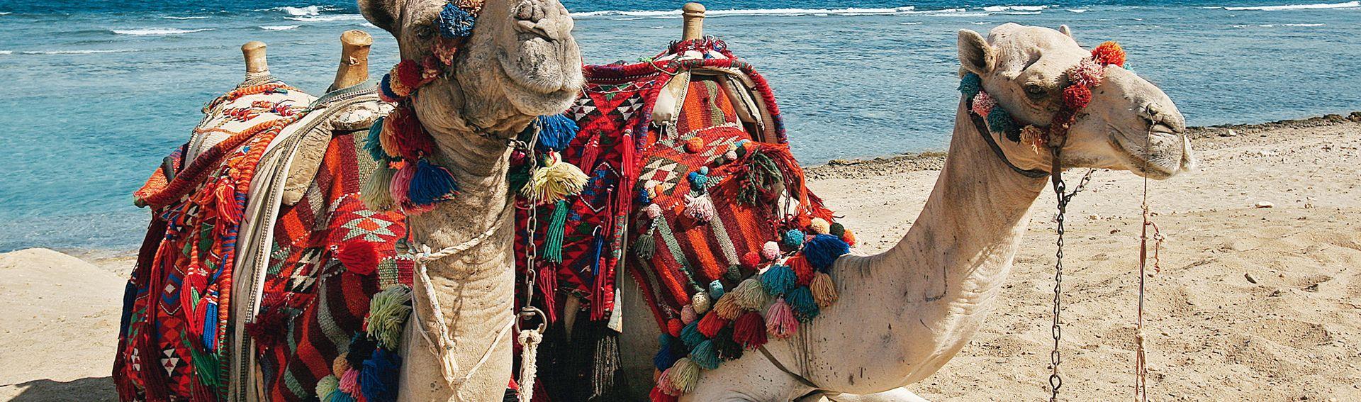 Nordafrika / Ägypten