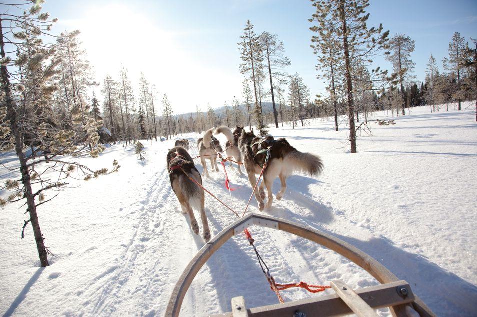 Balade en traîneau à chiens,  Laponie