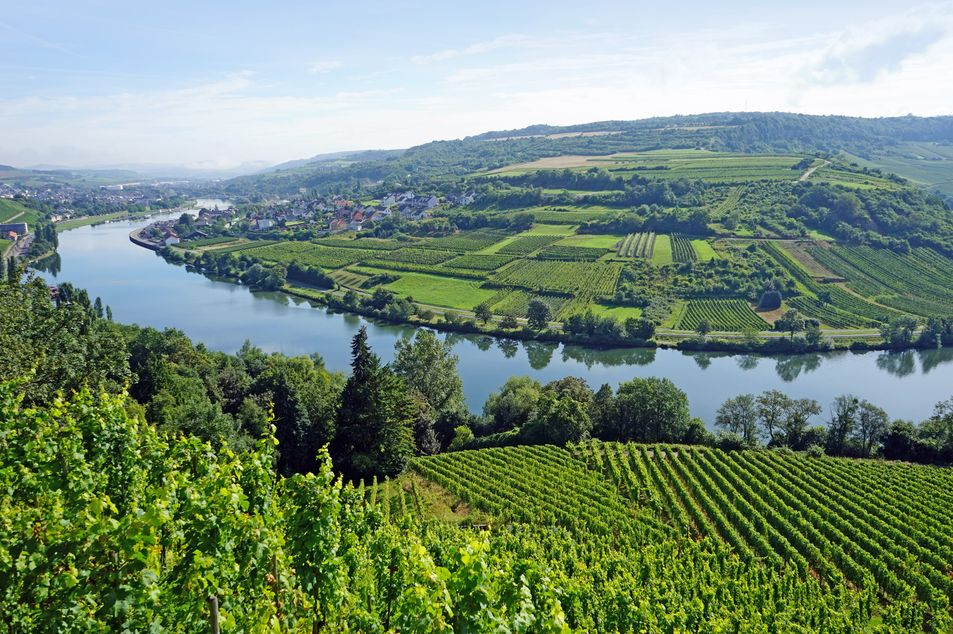 Weinregion an der Mosel