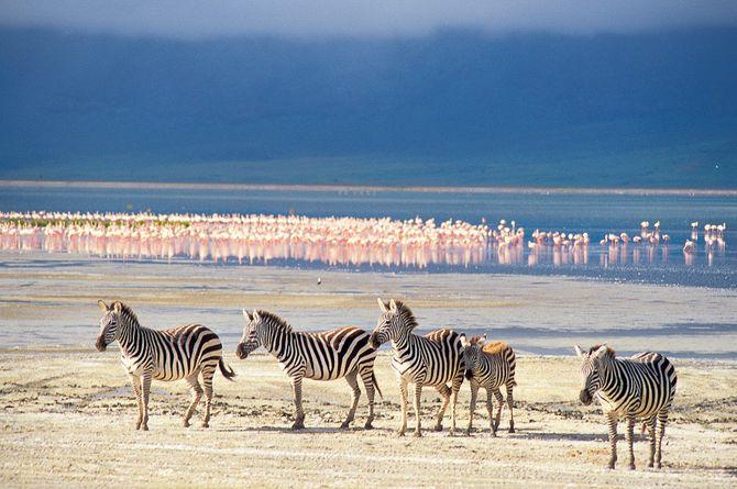 Grosse Kenia-Safari, Nairobi