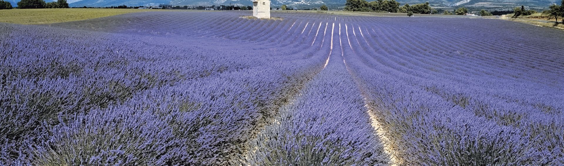 Provence (Midi de la France)