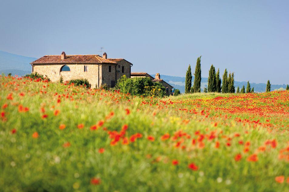 Champs de pavots à Toscane