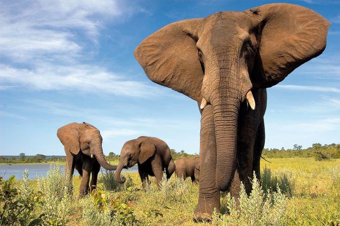 Fascination Afrique du Sud et Namibie, Région du Cap